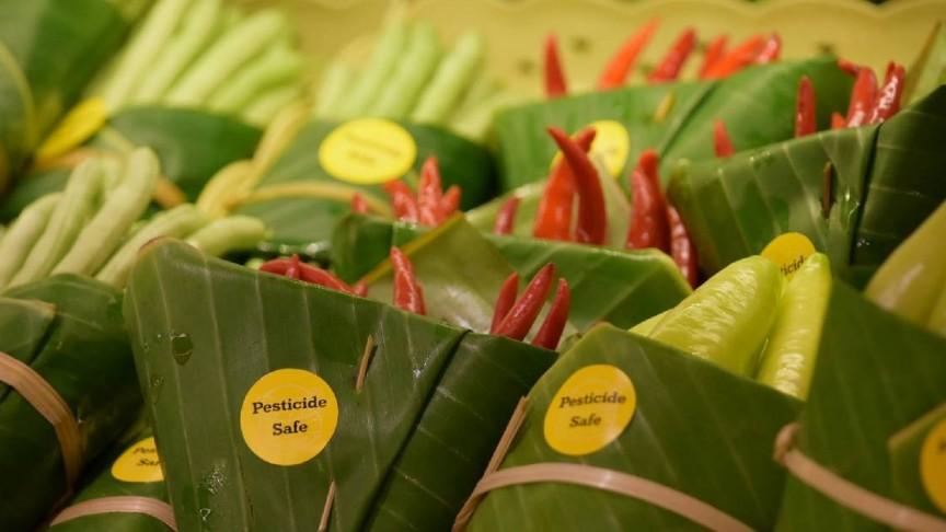 embalagen ecologicas folha de bananeira