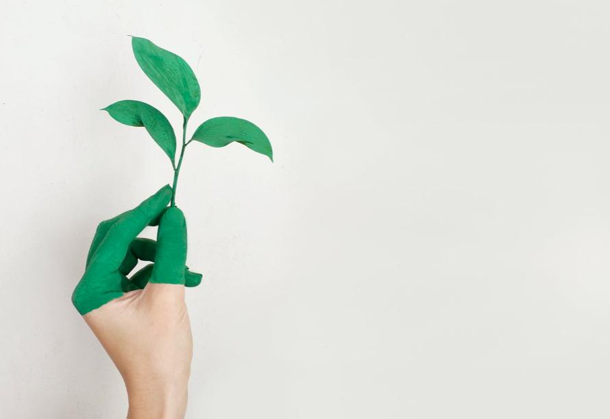 o que são produtos sustentáveis diferença do sustentavel para o ecologico